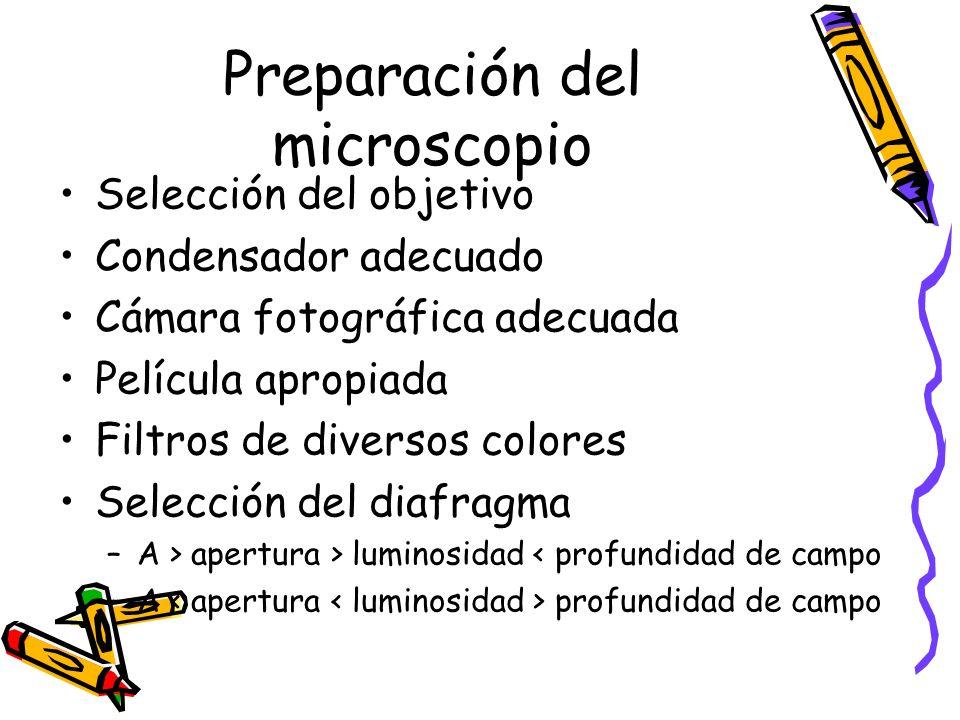 Preparación del microscopio