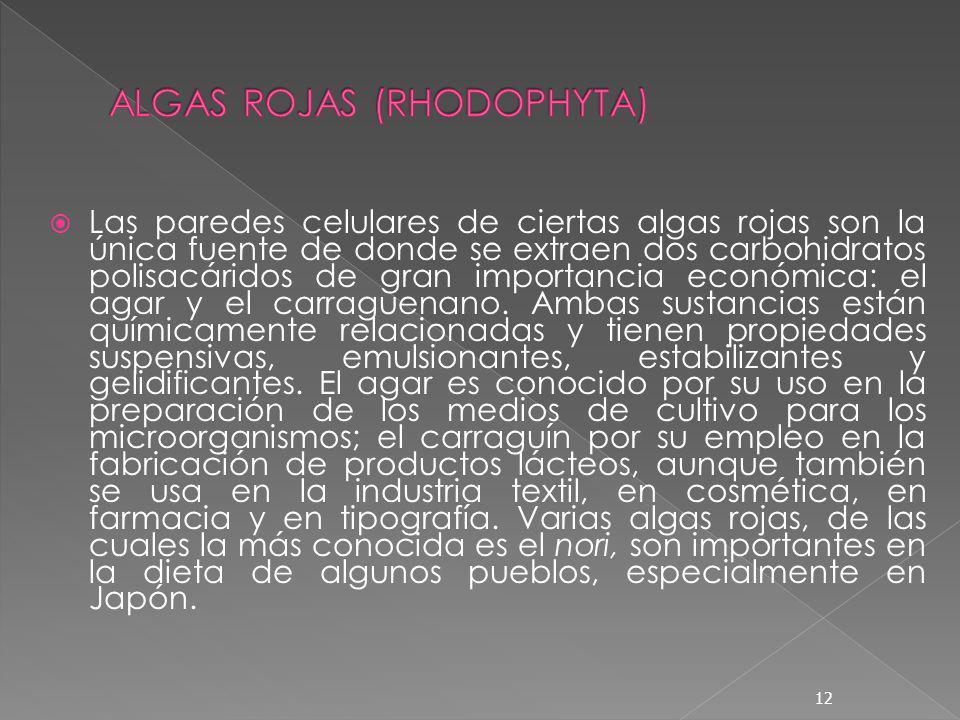 ALGAS ROJAS (RHODOPHYTA)