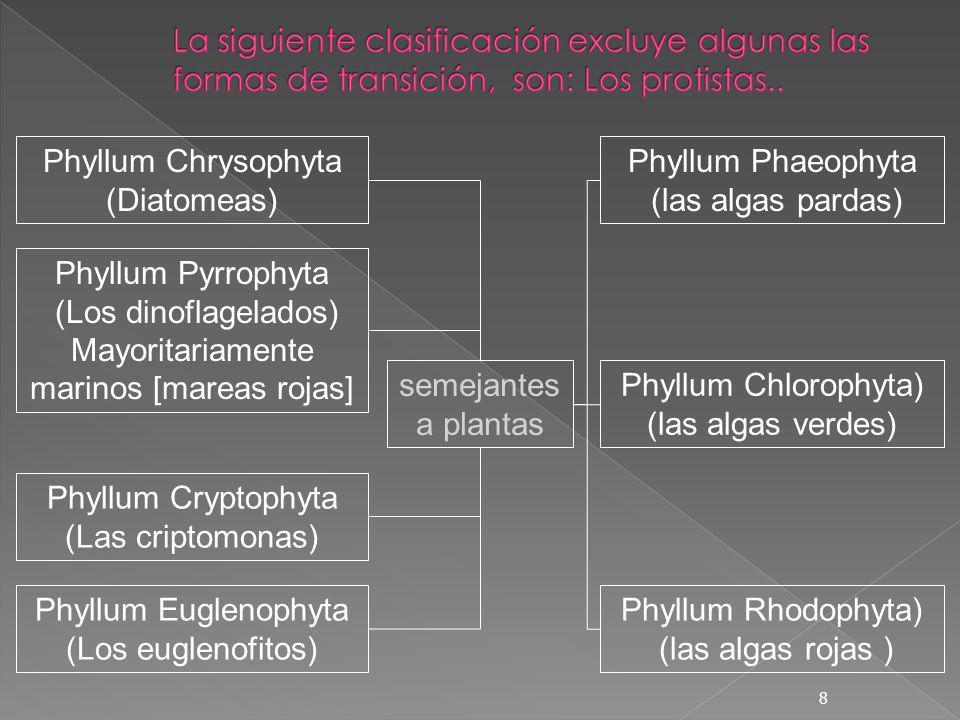 Phyllum Chrysophyta (Diatomeas) Phyllum Phaeophyta (las algas pardas)