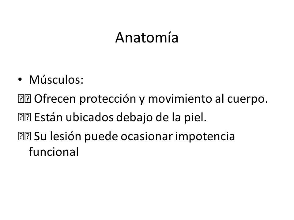 Anatomía Músculos:  Ofrecen protección y movimiento al cuerpo.