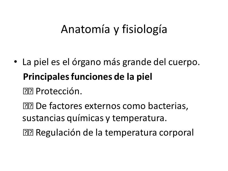 Anatomía y fisiología La piel es el órgano más grande del cuerpo.