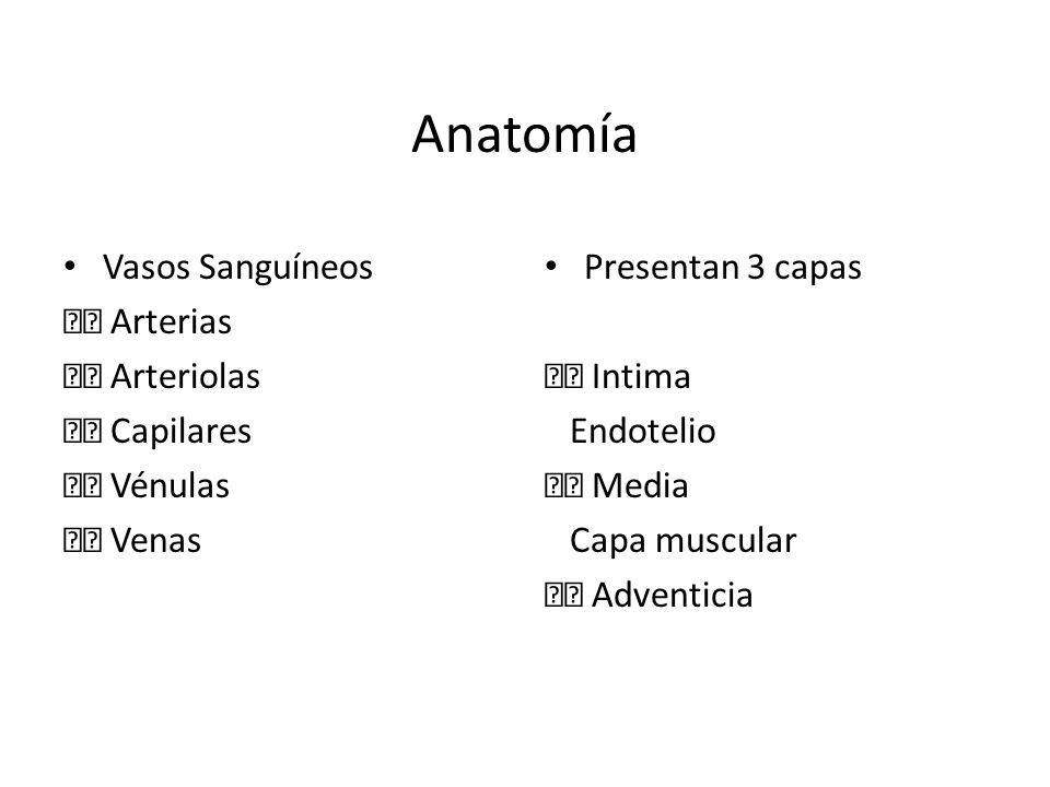 Anatomía Vasos Sanguíneos  Arterias  Arteriolas  Capilares