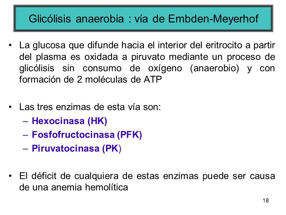 Glicólisis anaerobia : vía de Embden-Meyerhof