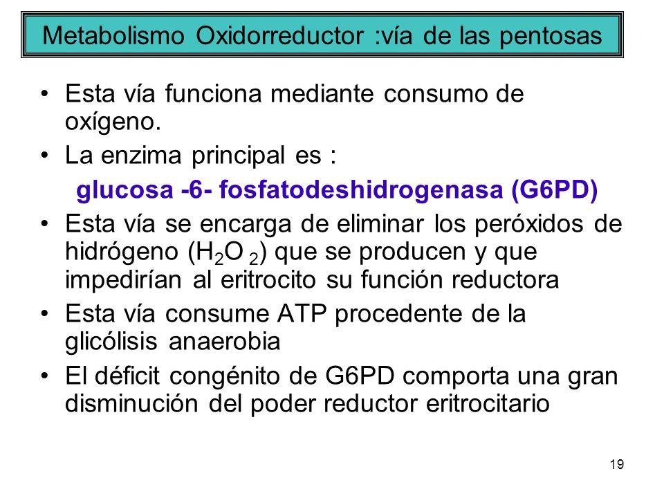 Metabolismo Oxidorreductor :vía de las pentosas