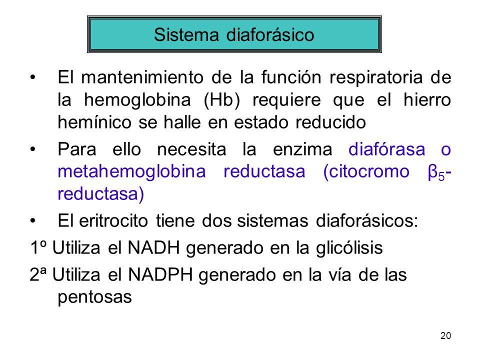Sistema diaforásico El mantenimiento de la función respiratoria de la hemoglobina (Hb) requiere que el hierro hemínico se halle en estado reducido.