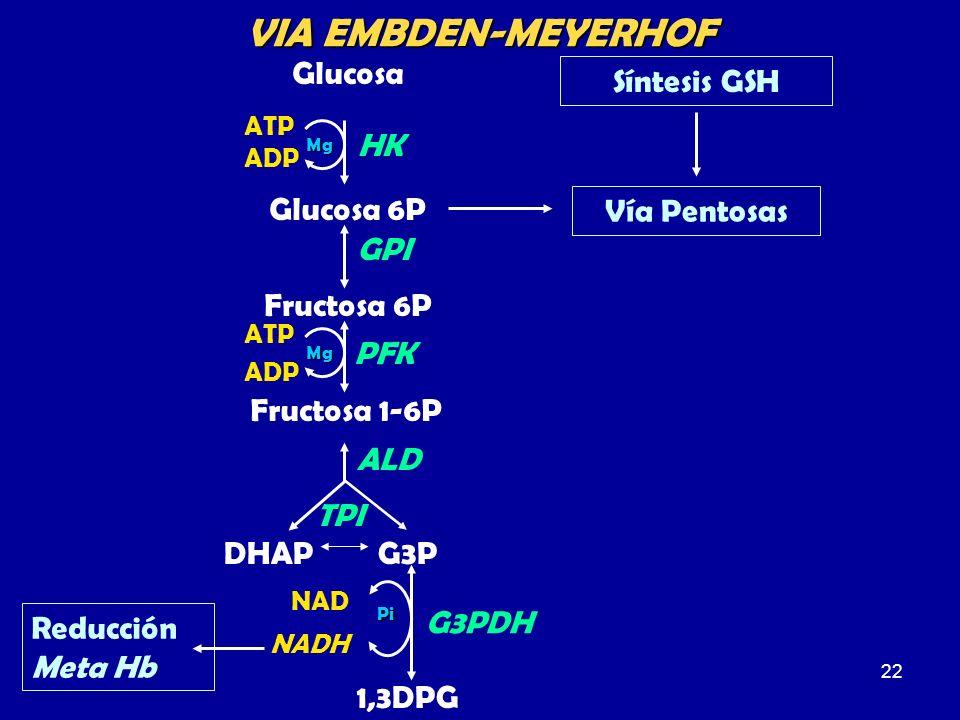 VIA EMBDEN-MEYERHOF Glucosa Vía Pentosas Síntesis GSH HK Glucosa 6P