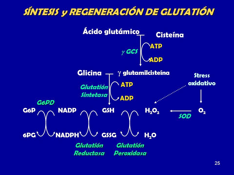 SÍNTESIS y REGENERACIÓN DE GLUTATIÓN