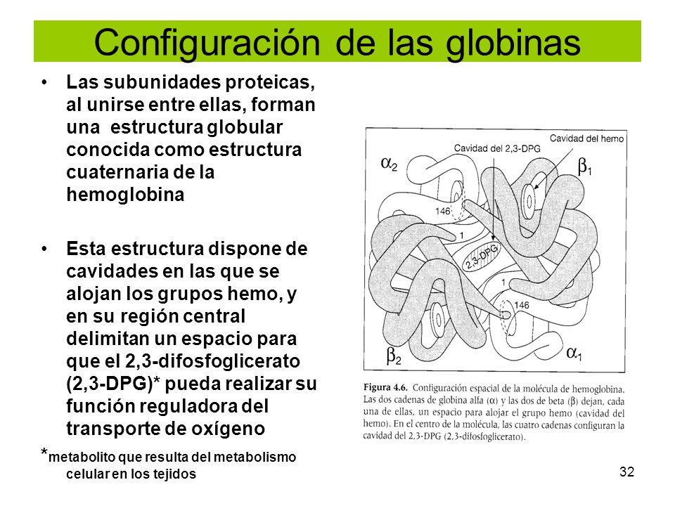 Configuración de las globinas