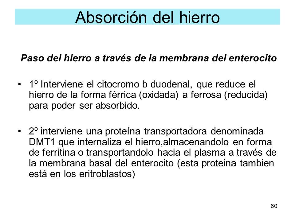 Absorción del hierro Paso del hierro a través de la membrana del enterocito.