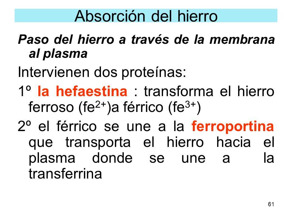 Absorción del hierro Intervienen dos proteínas: