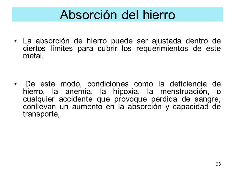 Absorción del hierroLa absorción de hierro puede ser ajustada dentro de ciertos límites para cubrir los requerimientos de este metal.