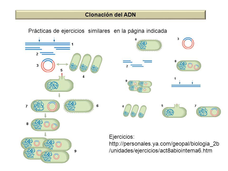 Clonación del ADN Prácticas de ejercicios similares en la página indicada. Ejercicios: