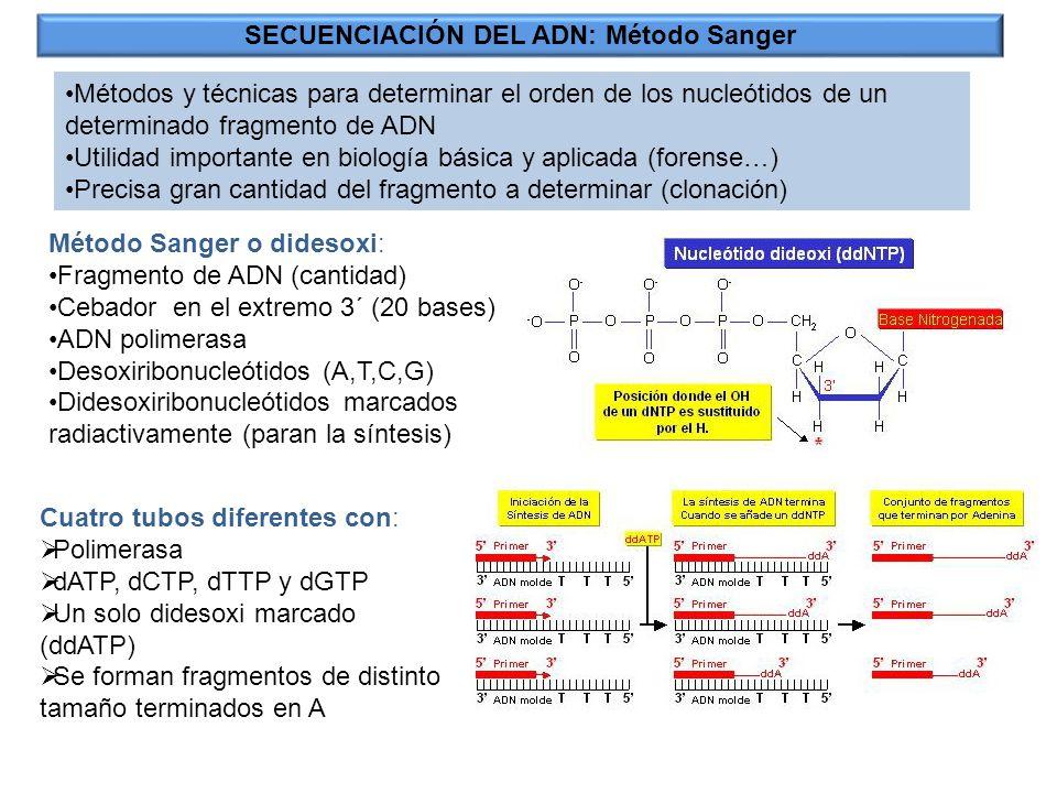 SECUENCIACIÓN DEL ADN: Método Sanger