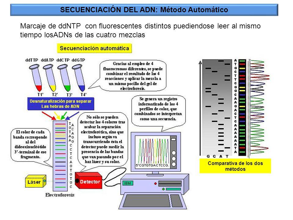SECUENCIACIÓN DEL ADN: Método Automático