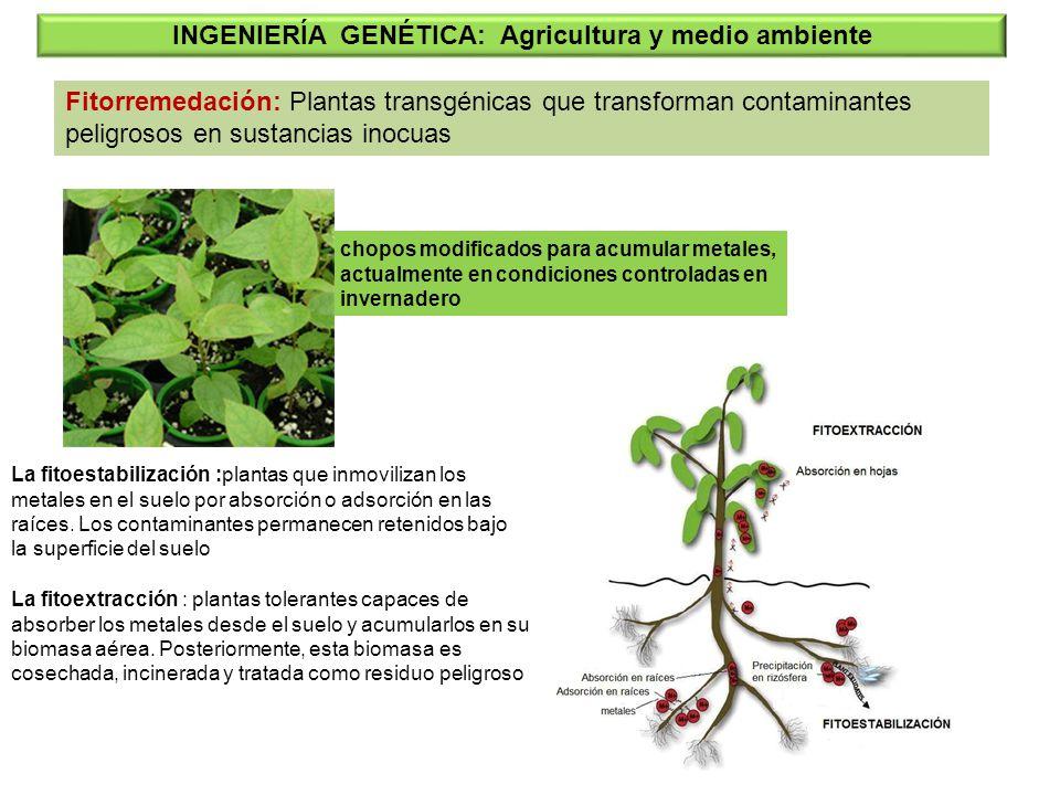 INGENIERÍA GENÉTICA: Agricultura y medio ambiente