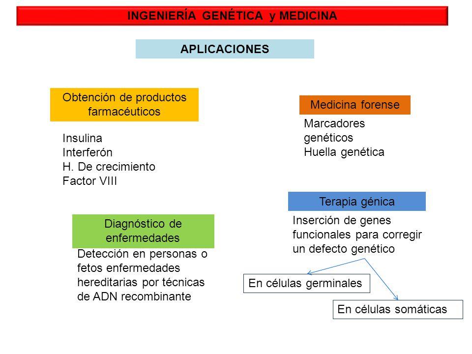 INGENIERÍA GENÉTICA y MEDICINA