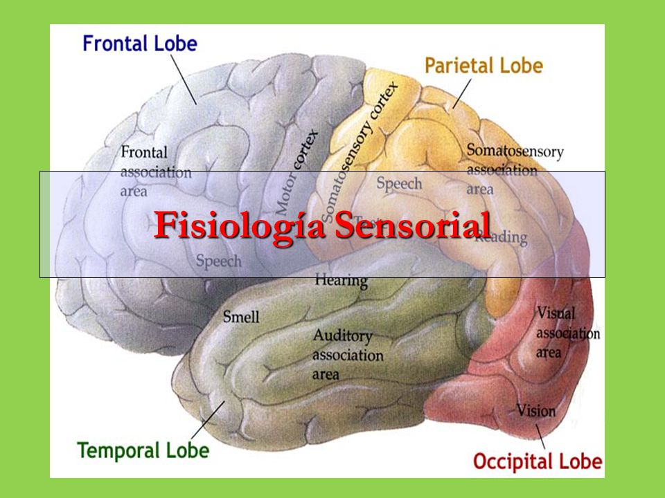 Sistema Nervioso Sensorial
