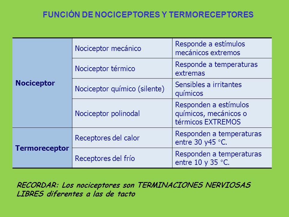 Vias Sensoriales Receptor Neurona de 4to Orden Neurona de 3er. Orden