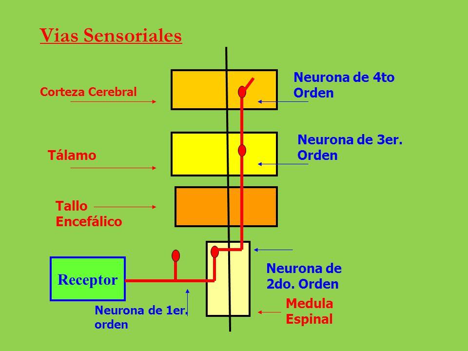 Exterocepción Sensibilidad Somato Visceral Propiocepción