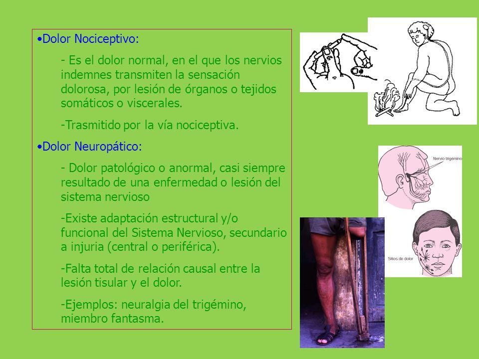 Dolor Somático: Afecta piel, músculo, articulaciones, ligamentos, y huesos. Es bien localizado y circunscrito a la zona dañada.