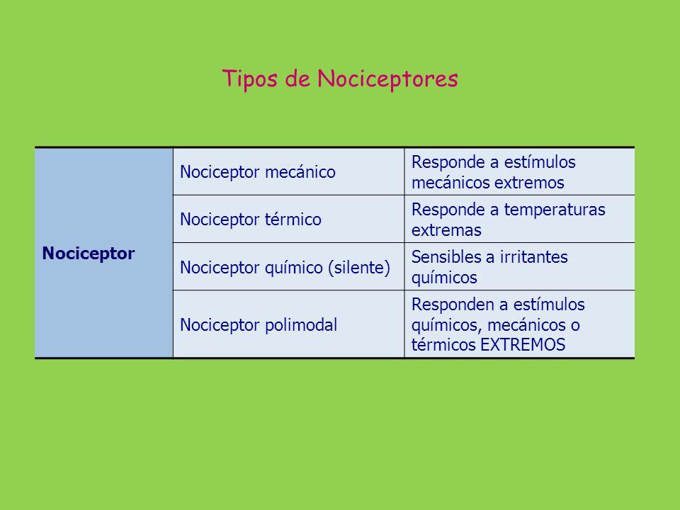 Encefalinas y Serotonina