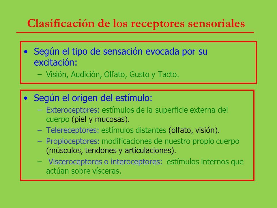 Clasificación de los receptores sensoriales: