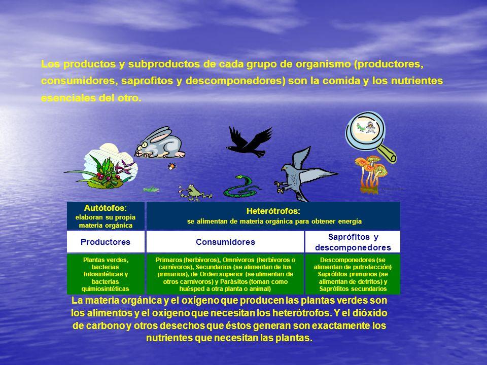 Los productos y subproductos de cada grupo de organismo (productores, consumidores, saprofitos y descomponedores) son la comida y los nutrientes esenciales del otro.
