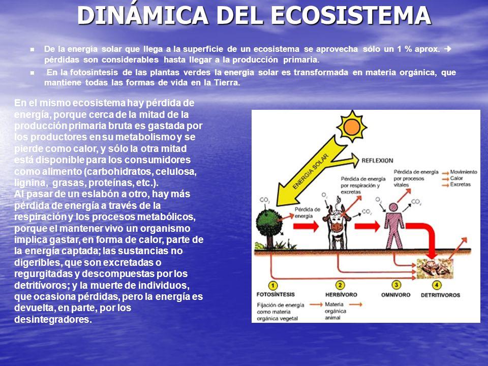 DINÁMICA DEL ECOSISTEMA