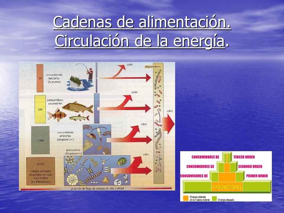 Cadenas de alimentación. Circulación de la energía.