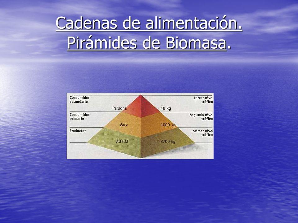 Cadenas de alimentación. Pirámides de Biomasa.