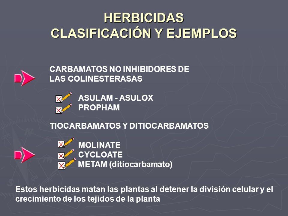 HERBICIDAS CLASIFICACIÓN Y EJEMPLOS