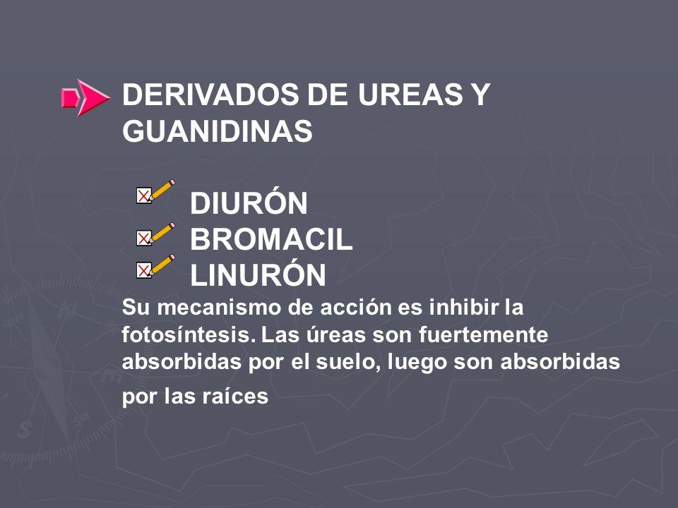DERIVADOS DE UREAS Y GUANIDINAS