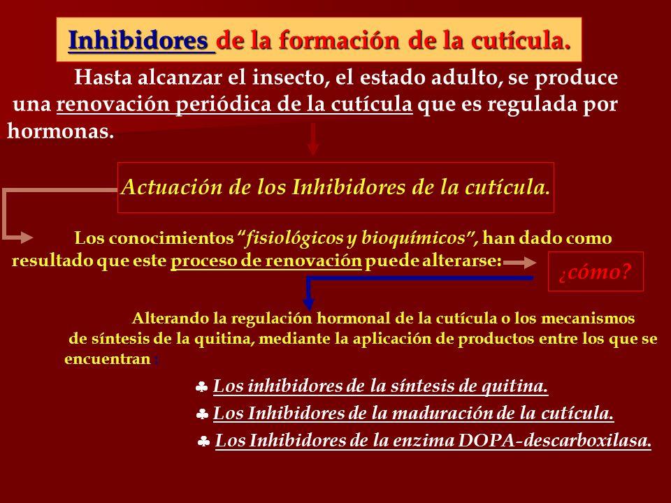 Inhibidores de la formación de la cutícula.