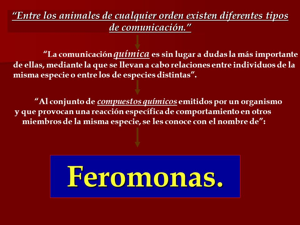 Entre los animales de cualquier orden existen diferentes tipos