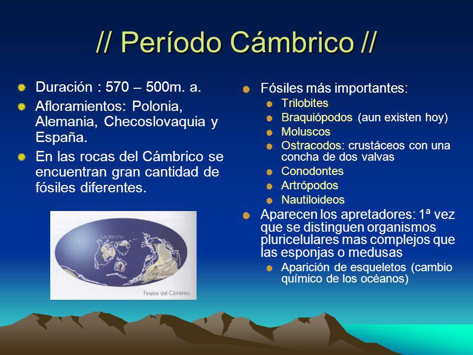 // Período Cámbrico // Duración : 570 – 500m. a.