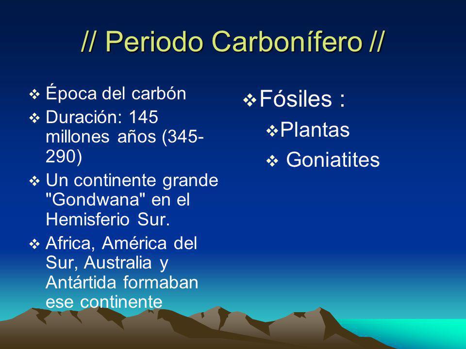 // Periodo Carbonífero //