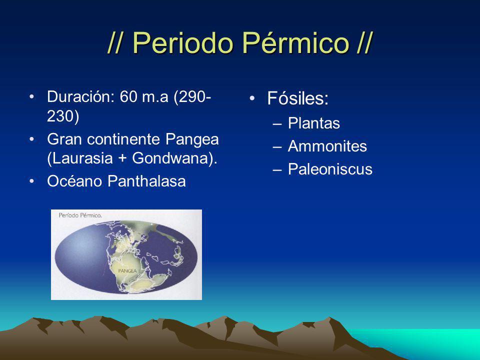 // Periodo Pérmico // Fósiles: Duración: 60 m.a (290-230) Plantas