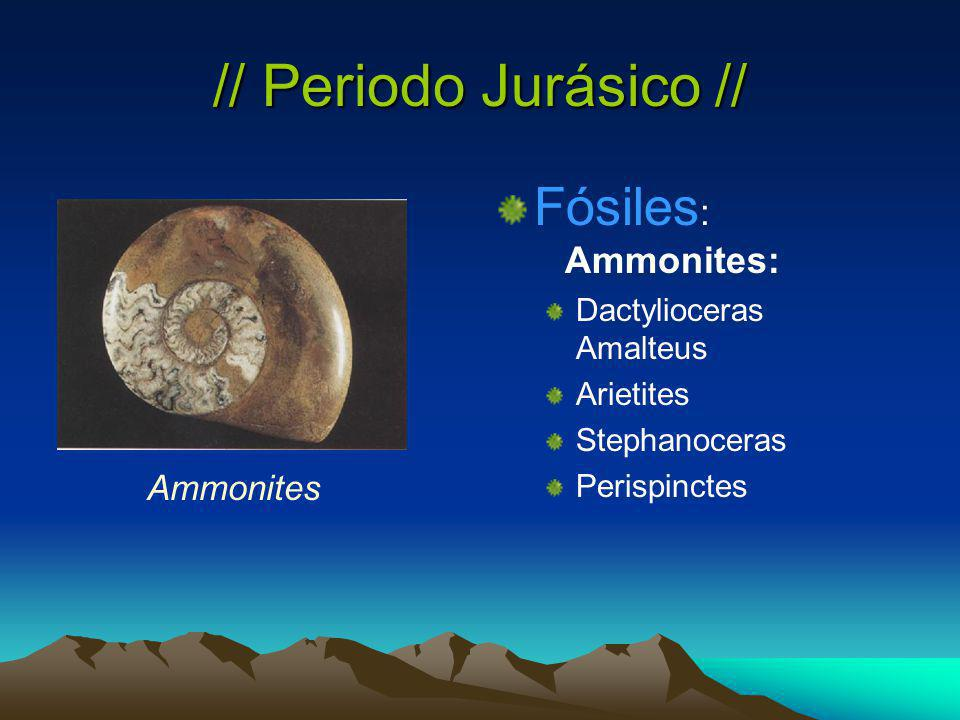 // Periodo Jurásico // Fósiles: Ammonites: Ammonites