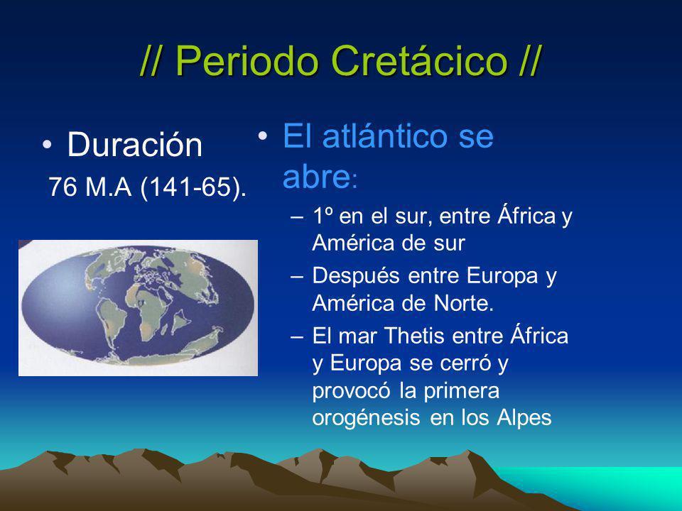 // Periodo Cretácico //