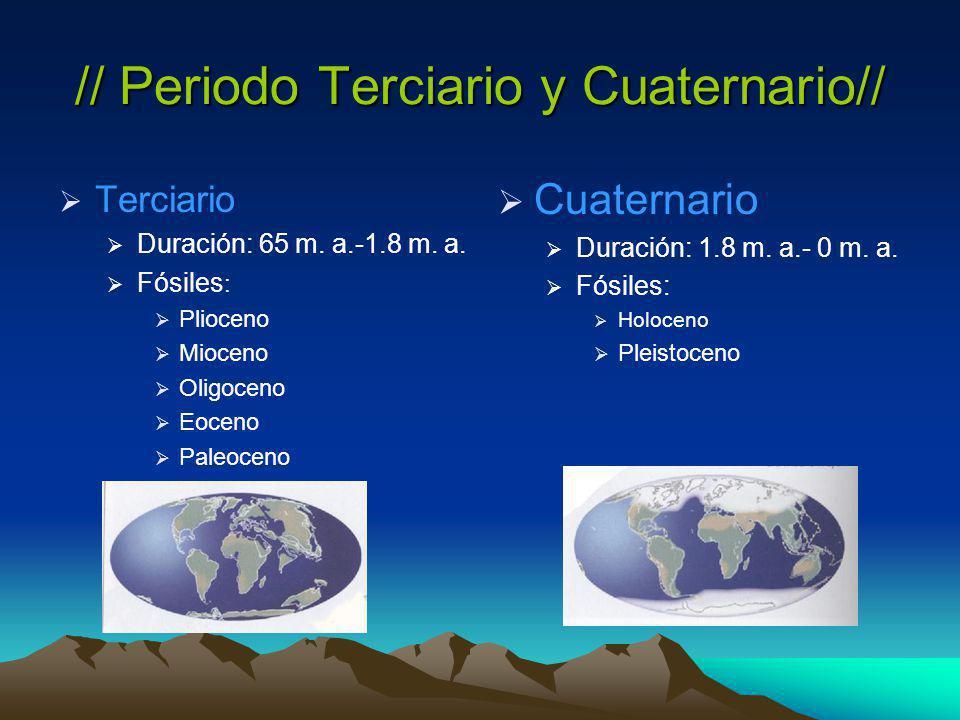 // Periodo Terciario y Cuaternario//