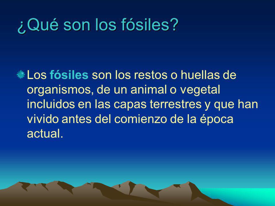 ¿Qué son los fósiles