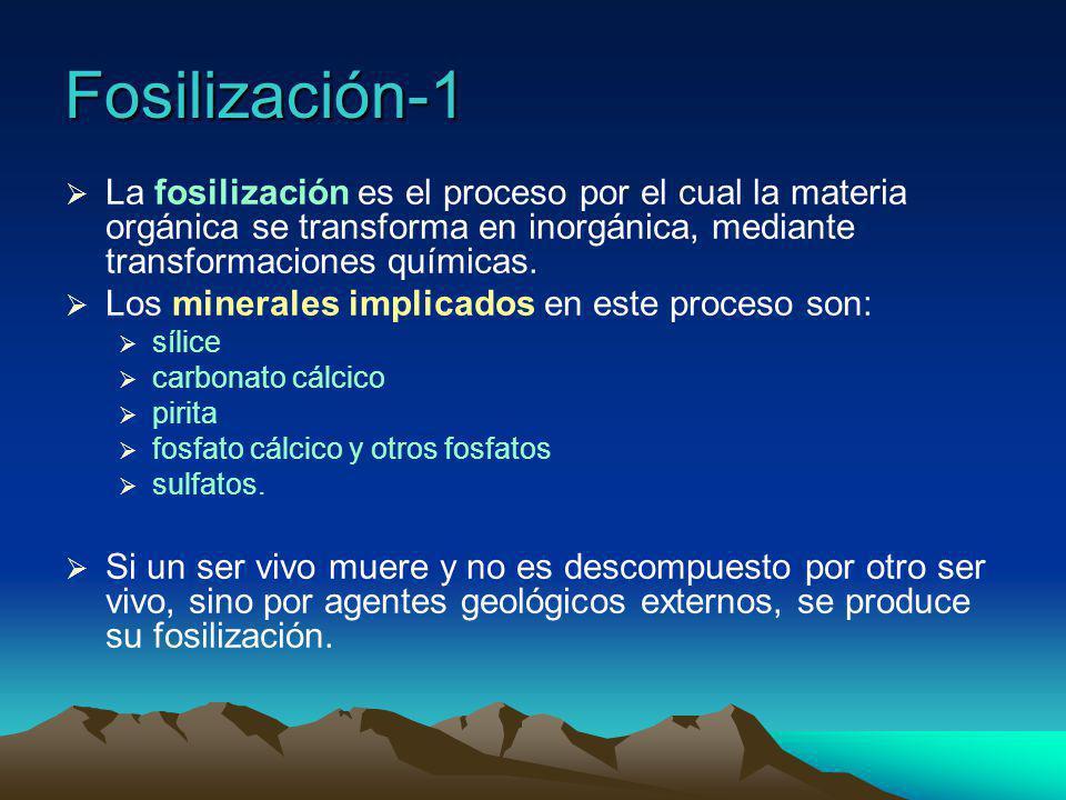 Fosilización-1 La fosilización es el proceso por el cual la materia orgánica se transforma en inorgánica, mediante transformaciones químicas.