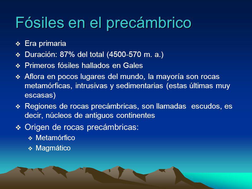 Fósiles en el precámbrico