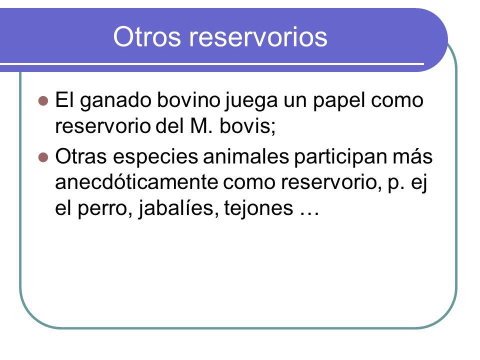 Otros reservorios El ganado bovino juega un papel como reservorio del M. bovis;