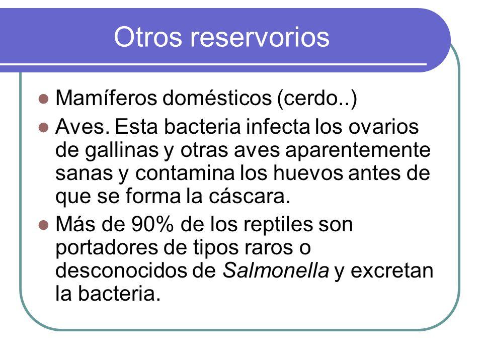 Otros reservorios Mamíferos domésticos (cerdo..)