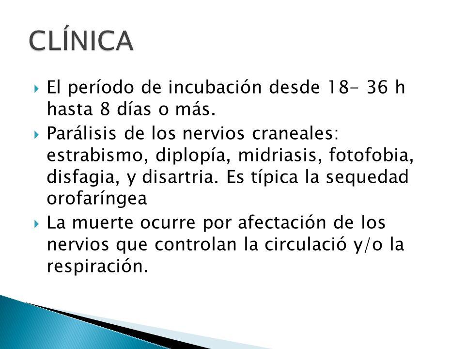 CLÍNICA El período de incubación desde 18- 36 h hasta 8 días o más.