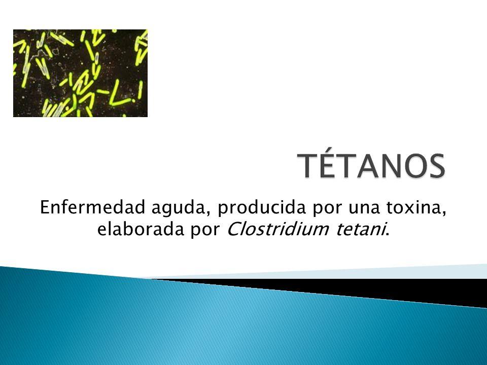 TÉTANOS Enfermedad aguda, producida por una toxina, elaborada por Clostridium tetani.