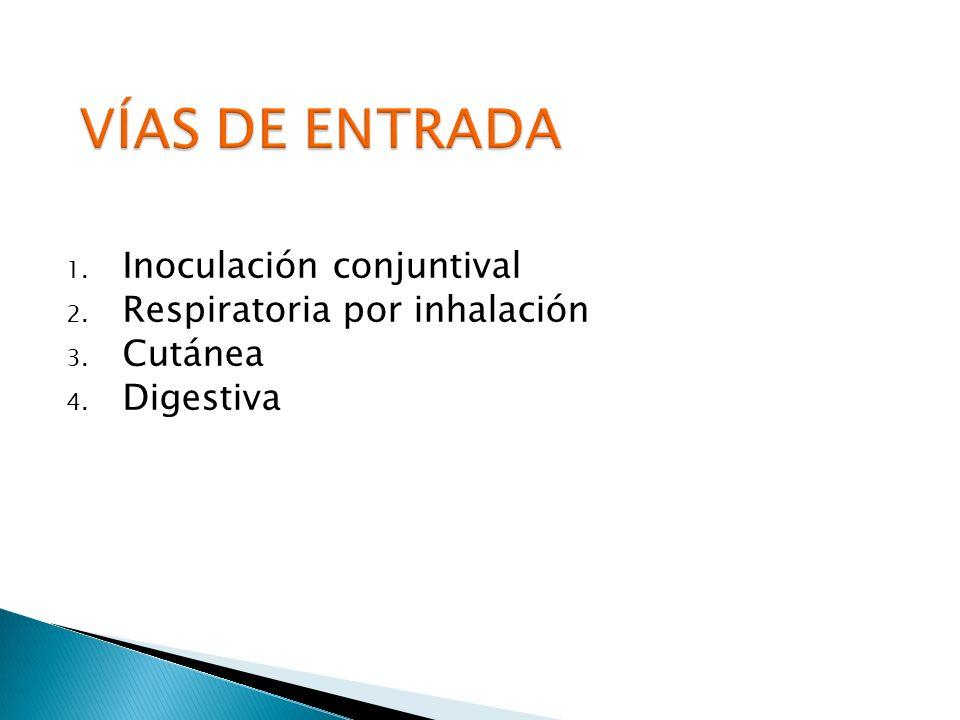 VÍAS DE ENTRADA Inoculación conjuntival Respiratoria por inhalación