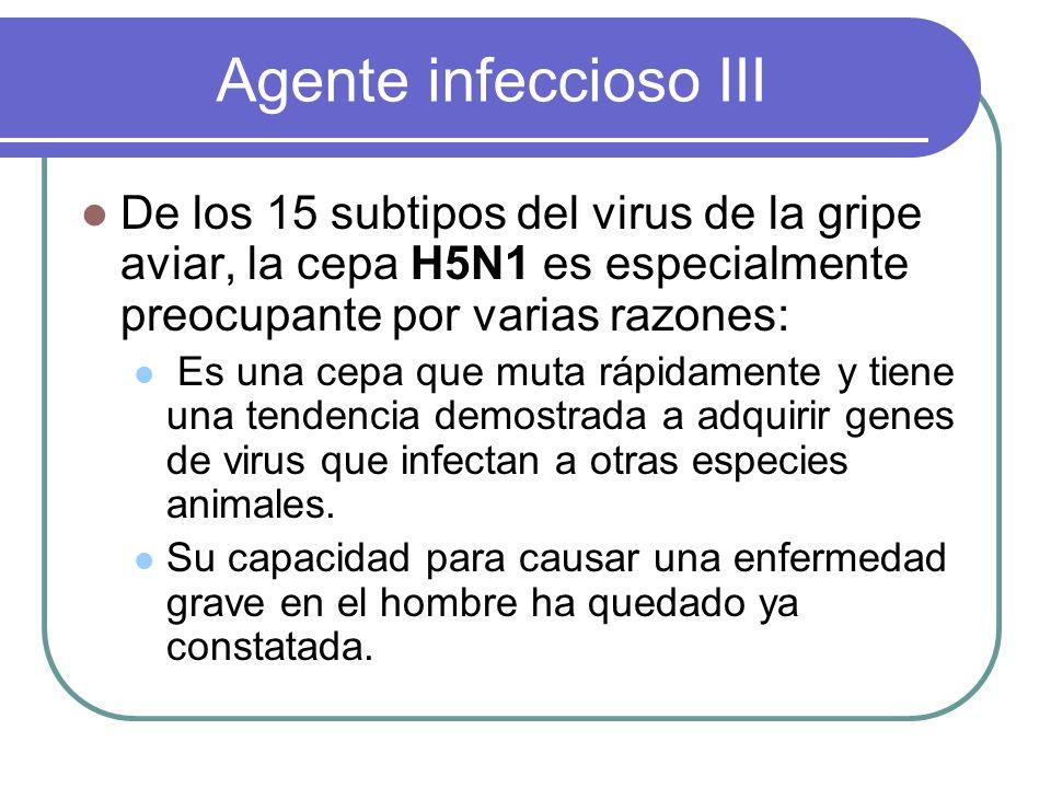 Agente infeccioso III De los 15 subtipos del virus de la gripe aviar, la cepa H5N1 es especialmente preocupante por varias razones: