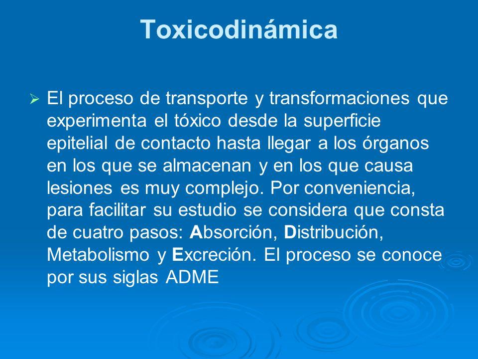 Toxicodinámica